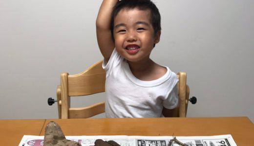 幼稚園でお芋掘り