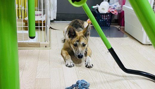 おもちゃとれるかな?