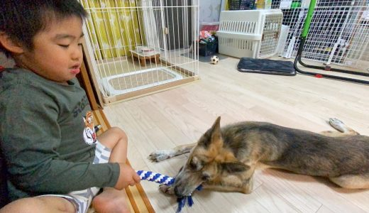 元野犬と遊ぶ5歳児