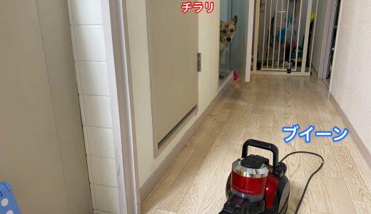 掃除機との関係性